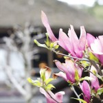 春_MG_3120